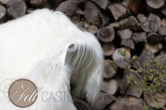 Kaschmir Ziegenfell naturweiß, langes glattes Fell 110 x 80 cm