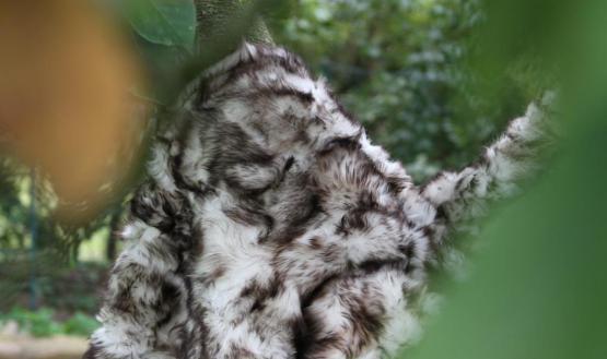 echte Toscana Lammfelldecke Polarwolf 200 x 155 cm Schaffelldecke abgefüttert